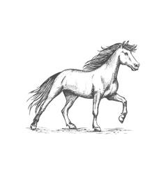 White horse stomping hoof sketch portrait vector