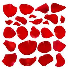A set of crimson rose petals vector