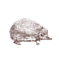 adorable hedgehog hand drawn with contour lines on vector image