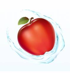 apple with a water vector image