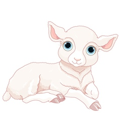 Baby sheep vector
