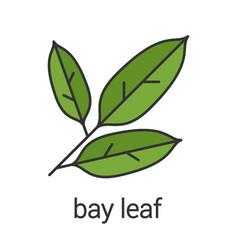 Bay leaf color icon vector