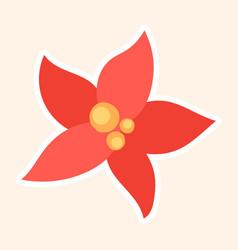 bright red festive poinsettia flower vector image