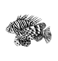 hand drawn lionfish vector image