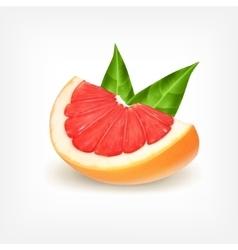 Slice of fresh grapefruit vector