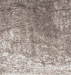 wood texture with natural pattern vector image