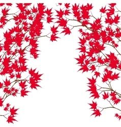 Greeting card Red maple leaves on the branches on vector image vector image