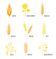 cereal icons set with rice wheat corn oats rye vector image