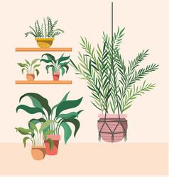 Houseplants in macrame hanger and shelfs vector