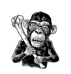 Monkey holding tibia vintage black engraving vector