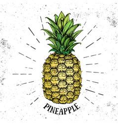 realistic tropic fruit pineapple vector image