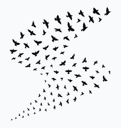 silhouette a flock birds black contours of vector image