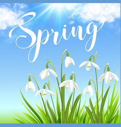 White snowdrops and green grass vector