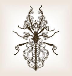 Bug phasmatodea engraving vector