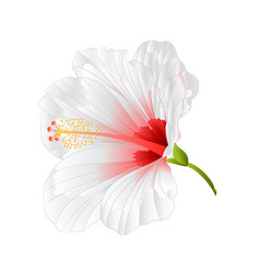 flower tropical plant hibiscus white vector image