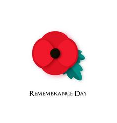 Poppy flower for remembrance day vector