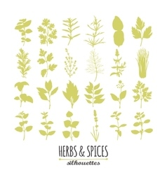 Collection of hand drawn spicy herbs silhouettes vector image vector image