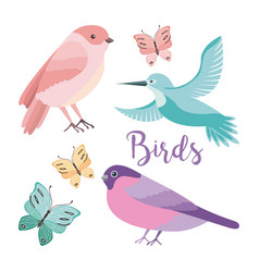 cute birds butterflies decoration natural vector image
