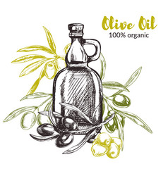 olive branches hand drawn vector image