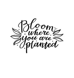 Bloom where you are planted inspirational quote vector