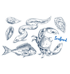 Different marine animals as seafood vector