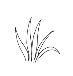 Hand-drawn sketch of a plant isolated on white vector