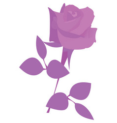 isolated colored flower vector image