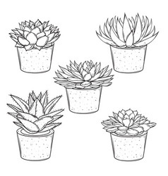 Set of sketches house plants succulents in vector