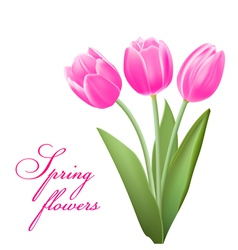 pink tulips in spring vector image vector image