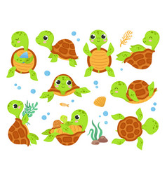 Cartoon turtles animal tortoise smiling turtle vector