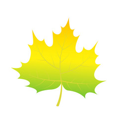 green leaf of tree icon isometric style vector image