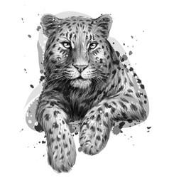 leopard jaguar monochrome graphic artistic vector image