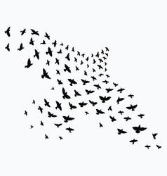 silhouette a flock birds black contours vector image