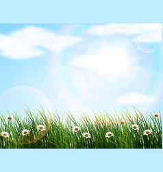 Nature background with flowers and grass vector image
