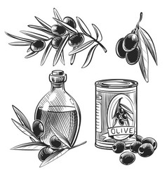 hand drawn olive oil bottles and olives vector image