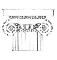 Ionic capital temple minerva polias at vector