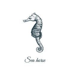 sea horse sketch hand drawing vector image