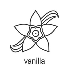 Vanilla flower linear icon vector