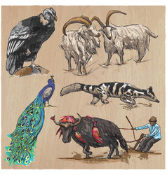 an hand drawn collection pack of animals vector image vector image