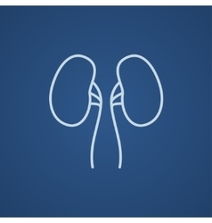 Kidney line icon vector image