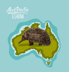 Poster echidna in australia map in green vector