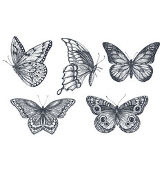 set beautiful hand drawn butterflies vector image