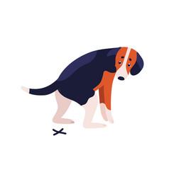 short haired dog beagle breed during shitting vector image