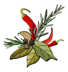 spices - chili pepper garlic bay leaf rosemary vector image