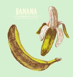Digital detailed banana vector