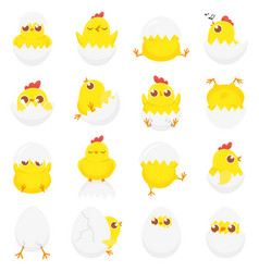 cute chicken in egg easter baby chick newborn vector image