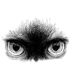 Freehand drawing eyes siamese cat vector