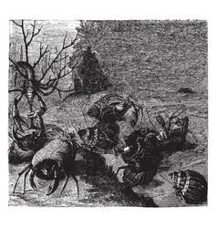 hermit crabs vintage vector image