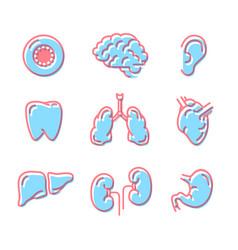 set simple colour icons human organs vector image