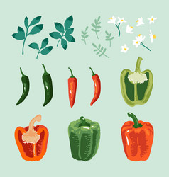 Summer set sweet and hot peppers flowers vector